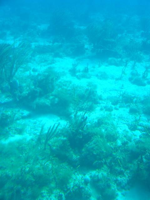 Omegaearthscience    Ocean